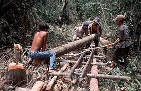 Aksi Illegal Logging/photo: wwf.org.au