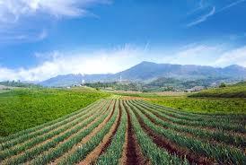 Lahan Sayuran di Modoinding, Minahasa Selatan