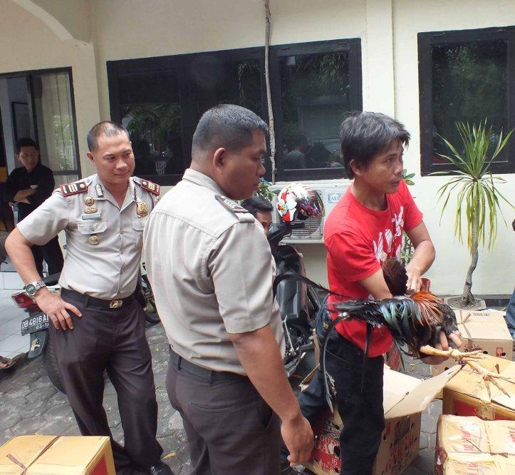 Polisi memeriksa ayam yang bersegel