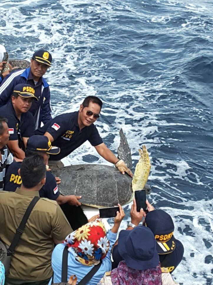 Kepala Pangkalan PSDKP Sulawesi, Pung Nugroho lepas 70 ekor Penyu langka