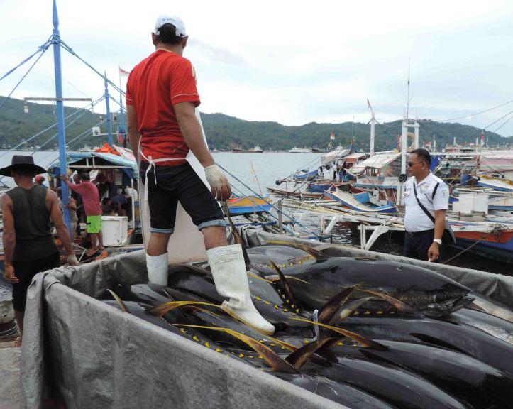 Komoditas Ikan Tuna tidak akan pernah merapat di kawasan pesisir, jika Menteri Susi tidak menertibkan ribuan rumpon di Laut Sulawesi dan Laut Maluku